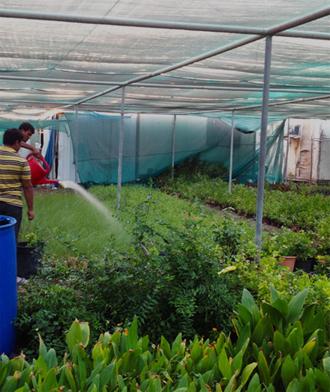 Al Naimi Landscaping WLL